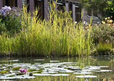 Teich mit Blüte